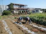 260412_サトイモの種植え付け (4)