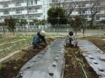 H260329野島農園 (1)