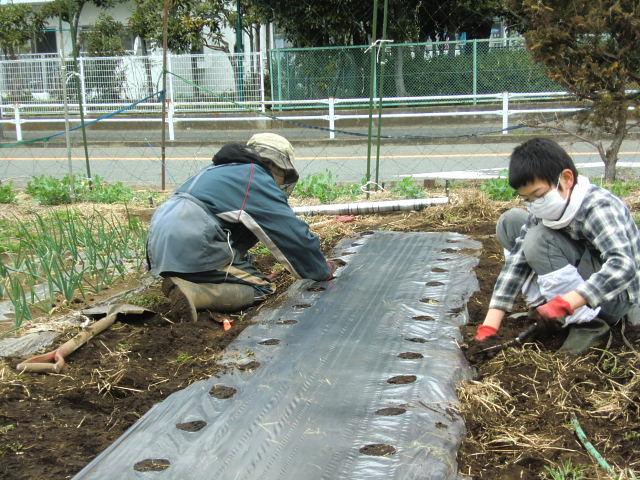 H260329野島農園 (2)