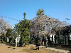 H260415門前氷川神社 (2)