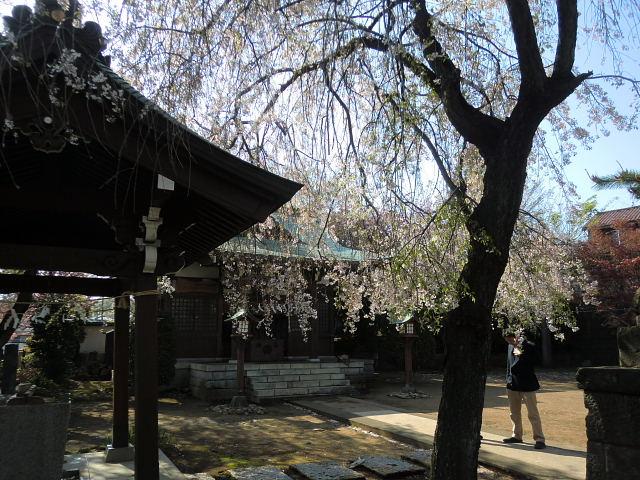 H260415門前氷川神社 (5)