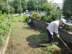 H260727野島農園共同作業日 (4)