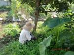 H260727野島農園共同作業日 (9)
