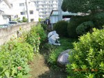 H260727野島農園共同作業日 (7)