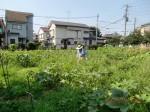 H260727野島農園共同作業日 (8)