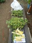H260810野島農園収穫日 (26)