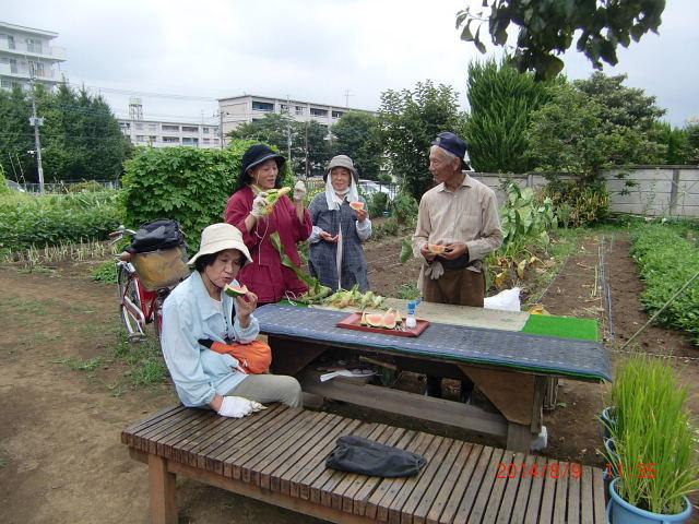 H260810野島農園収穫日 (8)