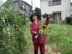 H260810野島農園収穫日 (2)