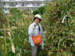 H260810野島農園収穫日 (3)