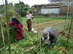 H260810野島農園収穫日 (4)