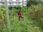 H260810野島農園収穫日 (5)