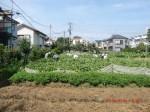 H260824野島農園共同作業日 (12)