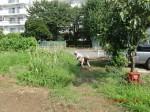 H260824野島農園共同作業日 (14)