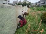 H260824野島農園共同作業日 (20)