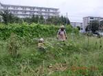 H260824野島農園共同作業日 (22)