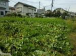 H260824野島農園共同作業日 (24)