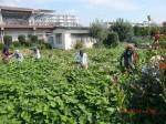 H260824野島農園共同作業日 (8)