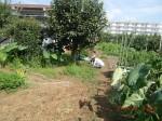 H260824野島農園共同作業日 (13)