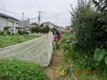 H260824野島農園共同作業日 (17)