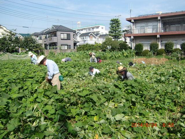 H260824野島農園共同作業日 (2)