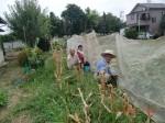 H260824野島農園共同作業日 (21)