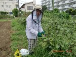 H260824野島農園共同作業日 (23)