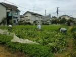 H260824野島農園共同作業日 (27)