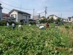 H260824野島農園共同作業日 (3)