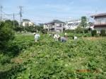 H260824野島農園共同作業日 (5)