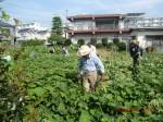 H260824野島農園共同作業日 (6)