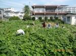 H260824野島農園共同作業日 (7)