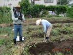 H260830秋野菜準備 (4)