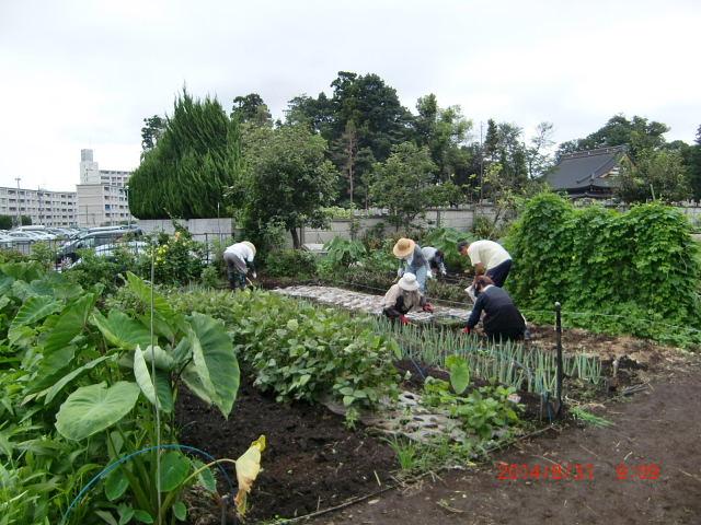H260830秋野菜準備 (5)