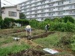H260830秋野菜準備 (1)