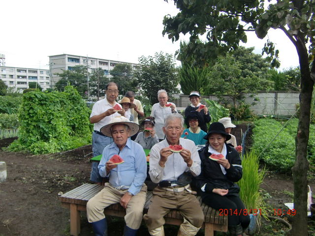 H260830秋野菜準備 (10)