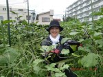 H260830秋野菜準備 (11)