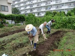 H260830秋野菜準備 (2)