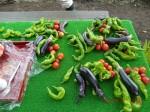 H260830秋野菜準備 (7)