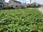H260831秋野菜準備 (11)