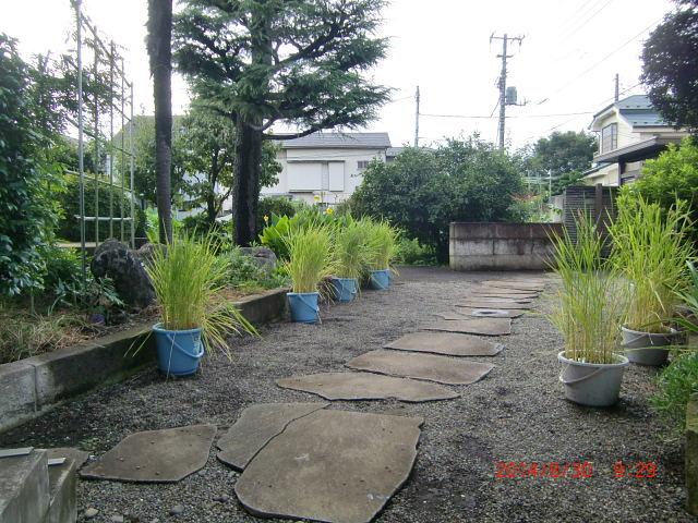 H260831秋野菜準備 (22)