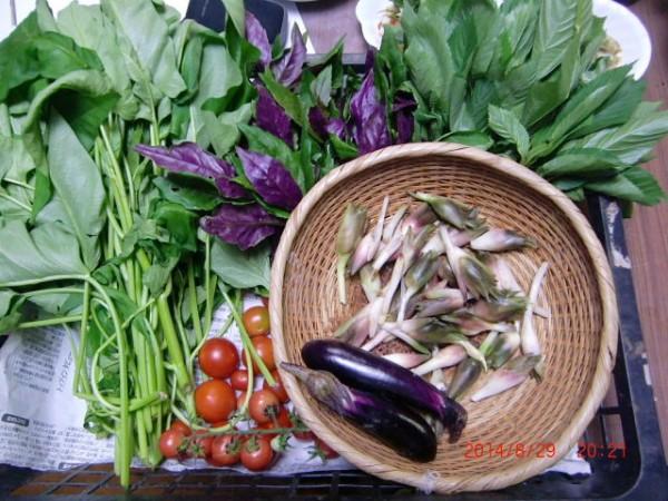 H260831秋野菜準備 (21)