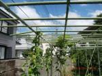 H260831秋野菜準備 (3)