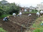 H260910ジャガイモの種植え付け (3)
