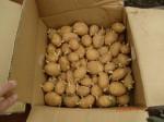 H260910ジャガイモの種植え付け (1)