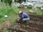 H260910ジャガイモの種植え付け (12)