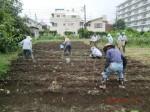 H260910ジャガイモの種植え付け (2)