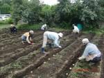 H260910ジャガイモの種植え付け (6)