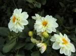 H261011花 (7)