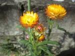 H261011花 (12)