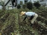 H261021サツマイモ掘りの段取り (4)